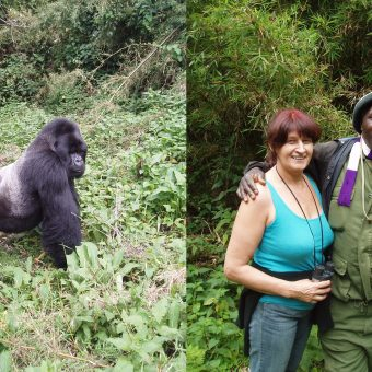 Wildlife Conservation – Silver Backed Gorillas of Great Lakes Region – 2006